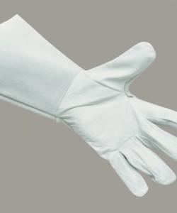A520-WHITE-PALM